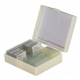 Набор микропрепаратов Konus 10: «Биология» (часть 1) модель 76608 от Konus