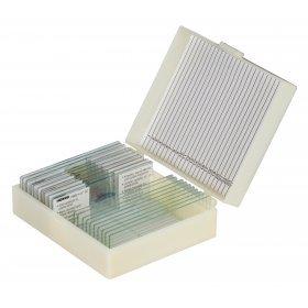 Набор микропрепаратов Konus 10: «Животные и растения. Мутации» модель 76611 от Konus