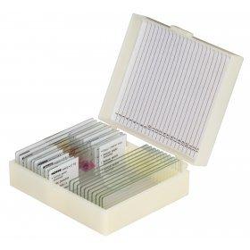 Набор микропрепаратов Konus 10: «Человеческое тело. Норма» модель 76615 от Konus